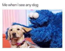 Cookie Monster Meme - cookie monster dog meme memepi