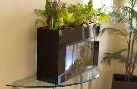 student designed kit turns 10 gallon aquariums into aquaponic