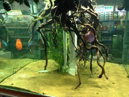 northampton maidenhead aquatics fish store review tropical fish site