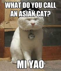 Funny Kitten Meme - 30 top cat meme pictures images and funny kitten quotesbae