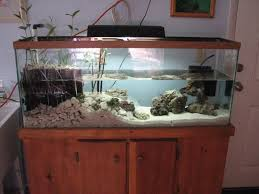 55 gallon aquarium light 55 gallon lagoon mangrove tank reef sanctuary
