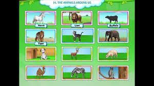 learn grade 1 evs the animals around us kidsclassroom youtube