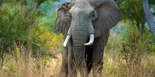 bbc future jumbo gardeners how elephants affect weather