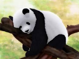 photo collection cute baby panda wallpaper hd