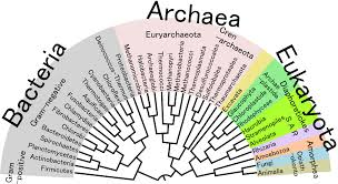 tree of life file phylogenetic tree of life png wikimedia commons