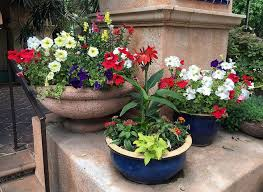 before you make your first container garden