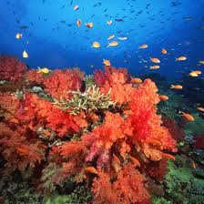 Florida Snorkeling images The best places to go snorkeling in jupiter florida usa today jpg