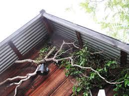 debra prinzing architecture