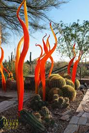 plants native to arizona 145 best arizona gardens succulents and cactus images on