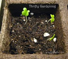 thrifty gardening growing up good not perfect