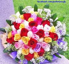 Colored Roses 10 Best Multi Colored Roses Images On Pinterest Flowers