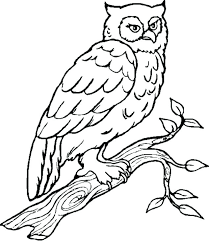 Owl Coloring Pages Owl Coloring Pages Photo Pic Free Owl Coloring Owl Color Pages