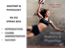 Human Anatomy And Physiology By Elaine Marieb Pdf Brain Anatomy 1 1 Pdf Anatomy U0026 Physiology 252 With Jones At