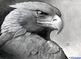 how to draw a realistic eagle golden eagle step by step birds