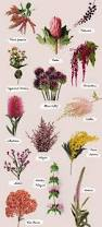 flower names by color flower flowers and gardens