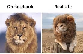 Lion Meme - pussy lion meme by gorgoroth7 memedroid