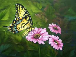 butterfly flower butterfly on flower paintings america