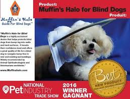 What Causes Dogs To Go Blind Blind Dog Halo Guide For Blind Dogs Blind Dog Bumper