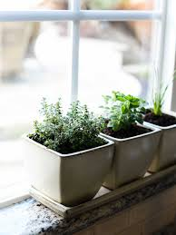 window herb harden indoor window herb garden popular how to start an indoor herb