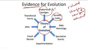 structural evidence for evolution ck 12 foundation
