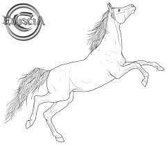 realistic horse coloring pages free arabian horse lineart by