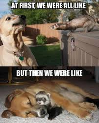 Good Friends Meme - 12 astonishing photos of dogs meeting other animals iheartdogs com