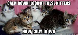 Calm Down Meme - calm down look at these kittens now calm down make a meme