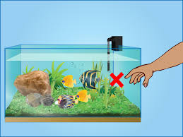 how to take care of your fish tanks 11 steps with pictures