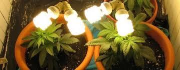 Best 25 Marijuana Grow Lights by When And How To Transplant Marijuana Plants
