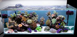Model Home Design Jobs by Fish Tank Unique Aquarium Design Picture Ideas Transform The Way
