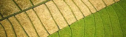 garten und landschaftsbau erfurt wege und plätze grünbau erfurt garten und landschaftsbau