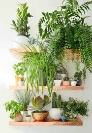 Fern Decor by Two Green Thumbs Up For Small Space Indoor Gardens Air Plants