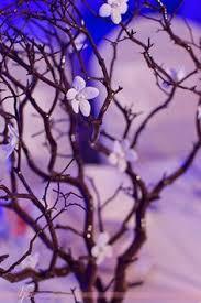 Manzanita Branches Centerpieces Manzanita Branches Centerpieces With Pearl Stephonatis Wedding