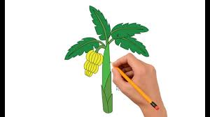 how to draw a banana tree step by step easy for kids youtube