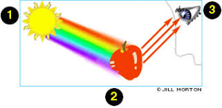How Do Blind People See Does Light And Colour Exist Only In Our Brain Do Blind People