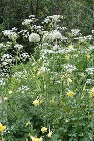 143 best plants u0026 shrubs images on pinterest flowers shrubs and