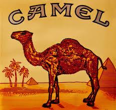 camel shopping advice