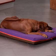 materasso per cani materassi per cani in ottima qualit罌 ortopedica e viscoelastica