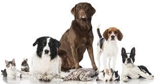 Pet Home Mandy U0027s Pet Chalet