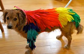 Halloween Costumes Parrots Bird Costume Dog Sam U0027s Parrot Costume Bird