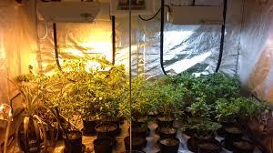 indoor tomato gardening zandalus net