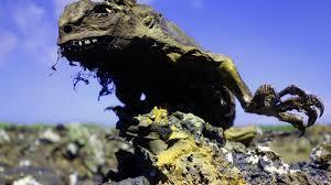 Iguana Island Iguana Runs On The Beach Galapagos Islands Youtube