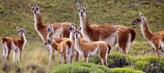 wildlife images Parque patagonia wildlife jpg
