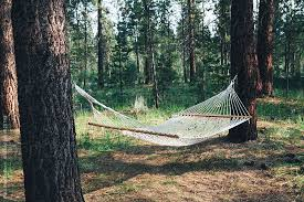 hammock hanging between two large pine trees in forest by paul