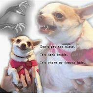 Chihuahua Meme - best 25 ideas about chihuahua meme find what you ll love