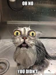 Oh No You Didn T Meme - oh no you didn t cat bath make a meme