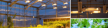 Greenhouse Lights Parsource Lighting Solutions