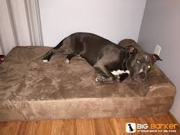 Barker Dog Bed 86 Best Natural Flea Remedies Images On Pinterest Dog Stuff Dog