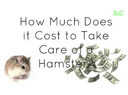 how much does it cost to take care of a hamster