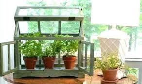 window herb harden tabletop herb garden indoor window gardening window herb garden